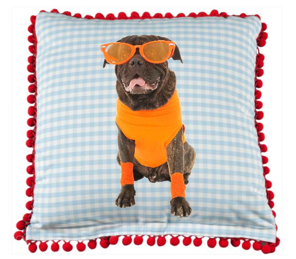 PROMO: Kussen Oranje Hond